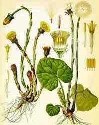 phytothérapie et transpiration excessive